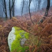 Moss covered rock in birchwood