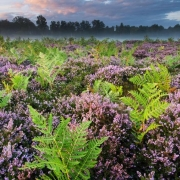 Summer dawn, Hothfield Heathlands, Kent.