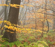 Autumn Colours: Full day  Photography Workshop