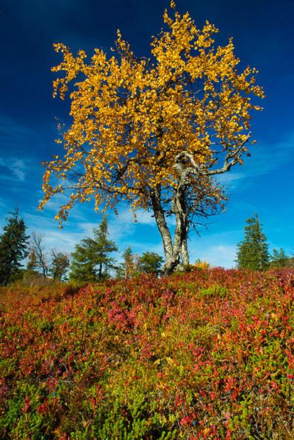 Colours of Lapland in autumn