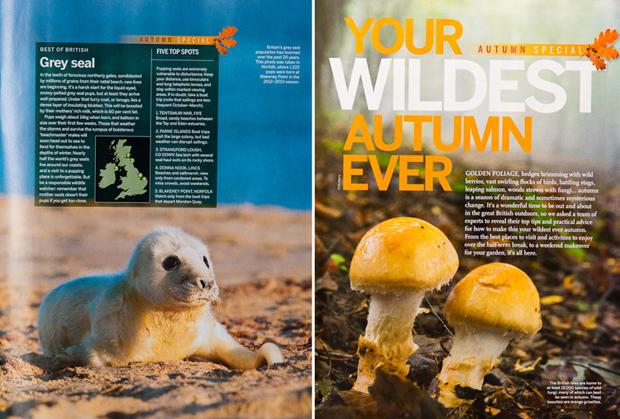 BBC Wildlife magazineNovember issue