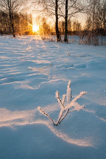 bialowieza_winter_poland_001