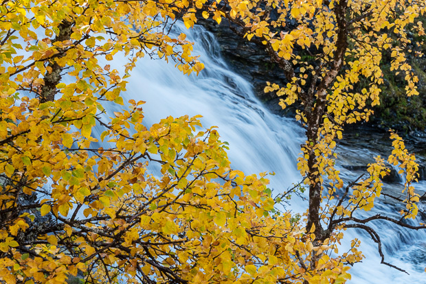 Silver birch and waterfall