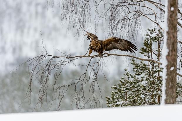 Finland-011