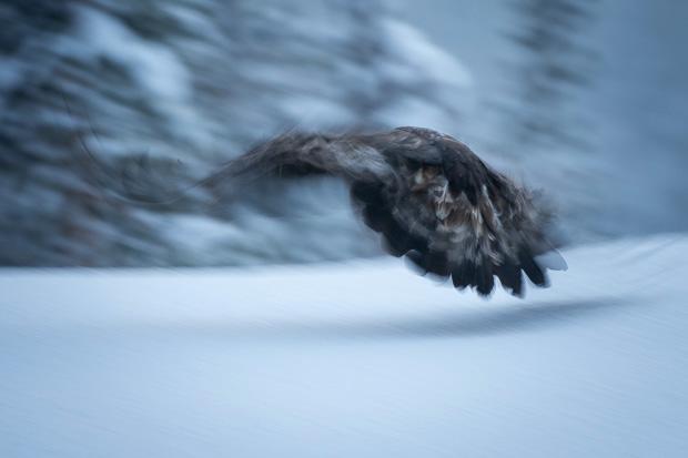 Departing. Eagle impression.